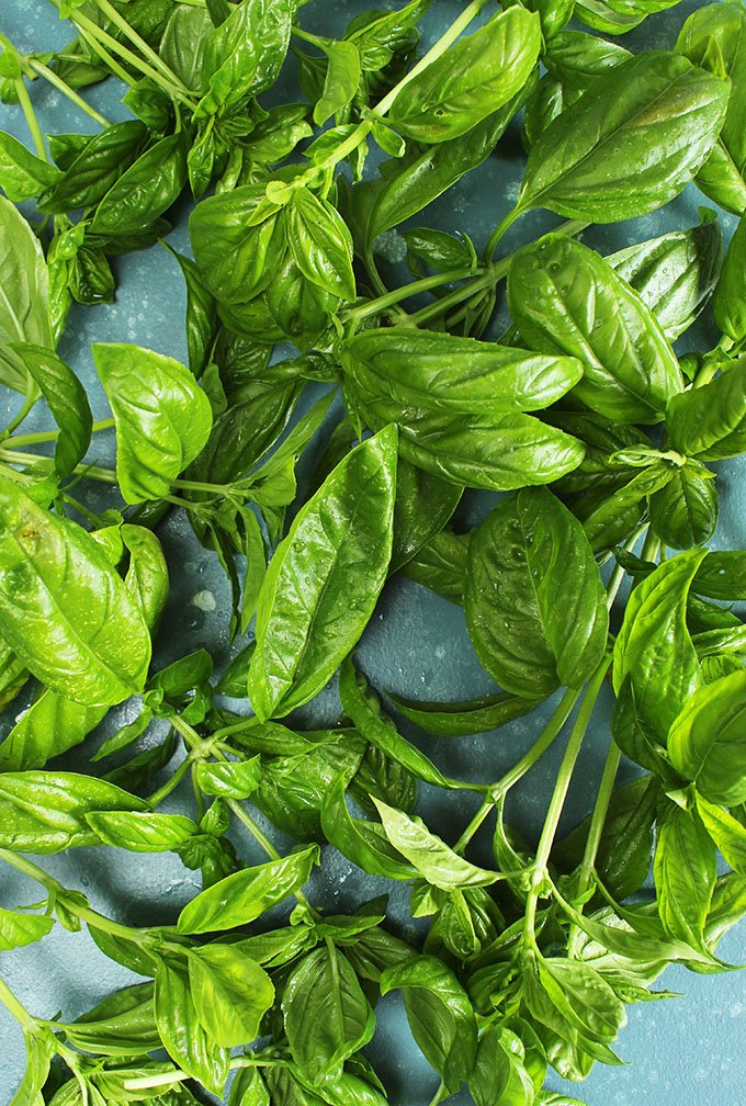 Basil leaves on a blue background from TheSuburbanSoapbox.com